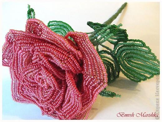 """Я сплела свою розочку в совместном плетении розы вместе с Василиной -Рая на Конфеткином форуме! Т.к. это первое мое французское плетение, то скажу честно - было сложно - никак не хотели дуги ложится ровненько, но я их победила! Конечно есть недочеты, но я очень довольна и мне моя """"Скромница"""" очень нравится! Высота розочки - 37см, диаметр цветочка - 10см. В лепестках использовала три цвета бисера. фото 6"""