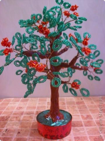 Представляю вам новое дерево, как его зовут я не знаю))) фото 1