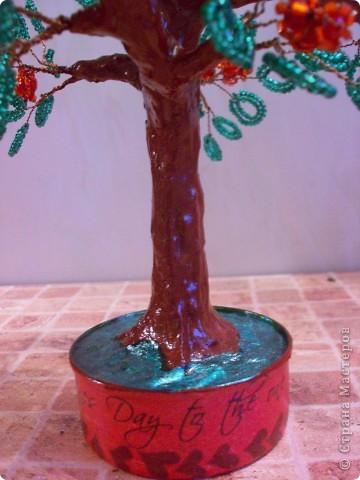 Представляю вам новое дерево, как его зовут я не знаю))) фото 2