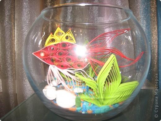 Эту рыбку увидела у татьяны62. Тоже захотела иметь дома золотую рыбку. фото 1