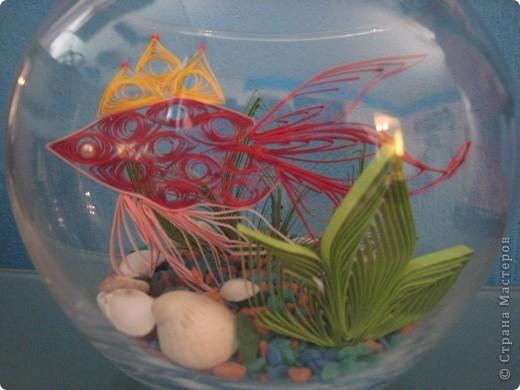 Эту рыбку увидела у татьяны62. Тоже захотела иметь дома золотую рыбку. фото 2