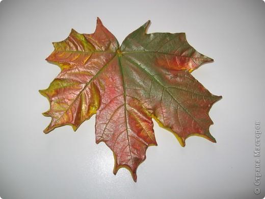 Последняя порция осенних листочков фото 3