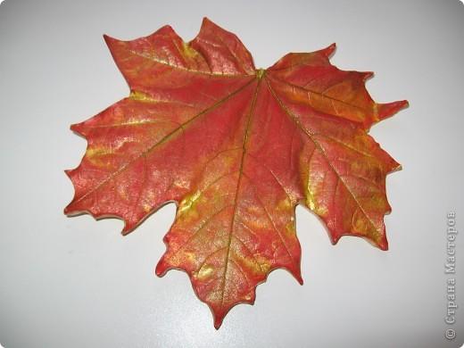 Последняя порция осенних листочков фото 4