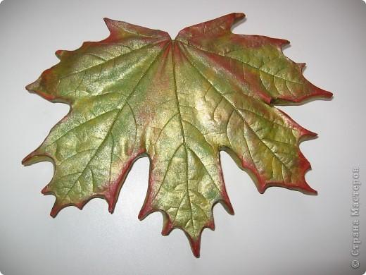 Последняя порция осенних листочков фото 5