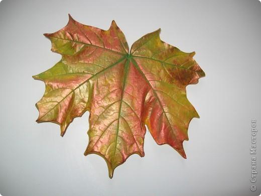 Последняя порция осенних листочков фото 6