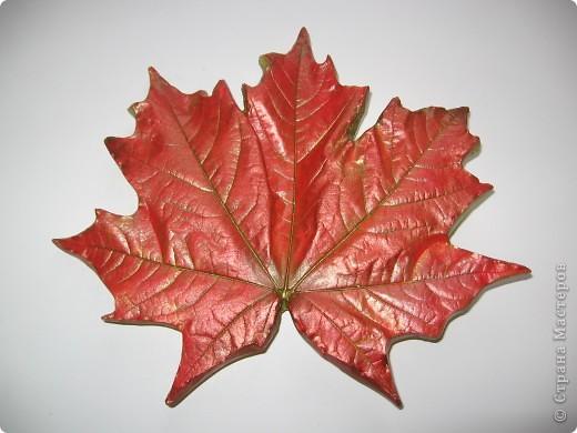 Последняя порция осенних листочков фото 7