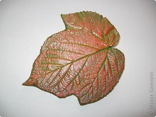 Последняя порция осенних листочков фото 9
