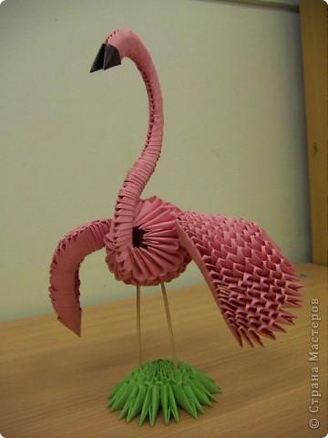 Фламинго фото 2