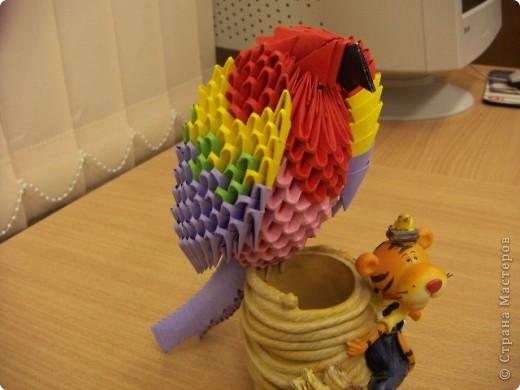 Попугай Кеша фото 2