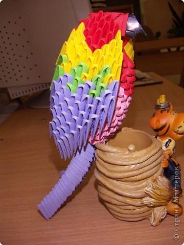 Попугай Кеша фото 3