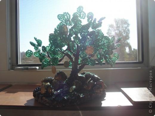 Еще одно денежное дерево фото 2