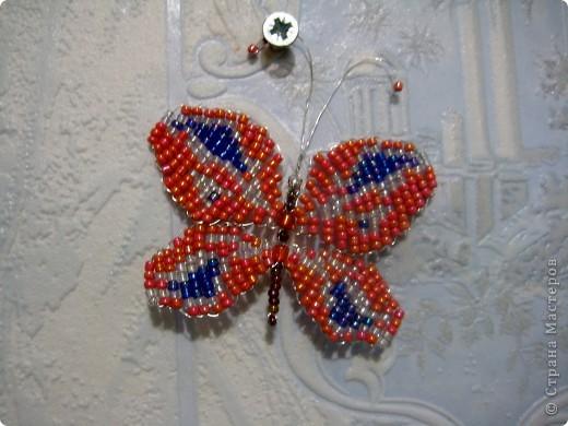 Вслед за подсолнухом у нас на кухне поселилась бабочка