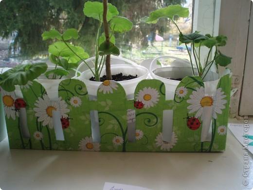 Всем хорошо известная салфеточка пошла на забор. Хочу напомнить: герань выращиваем, чтобы в мае высадить саду или на улицах города (такая социальная акция). мы решили участвовать. За забором майонезные ведерки с фамилиями детей. дети наблюдают, поливают. Две гераньки уже цветут. фото 2