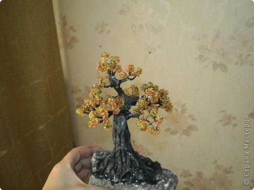 Первое дерево, так хочется чтобы вы оценили фото 2