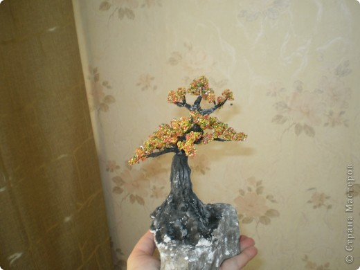 Первое дерево, так хочется чтобы вы оценили фото 1