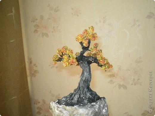 Первое дерево, так хочется чтобы вы оценили фото 3