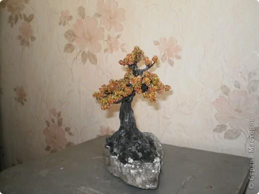 Первое дерево, так хочется чтобы вы оценили фото 4