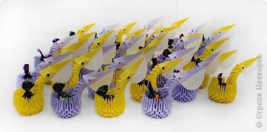 Пеликаны  фото 3