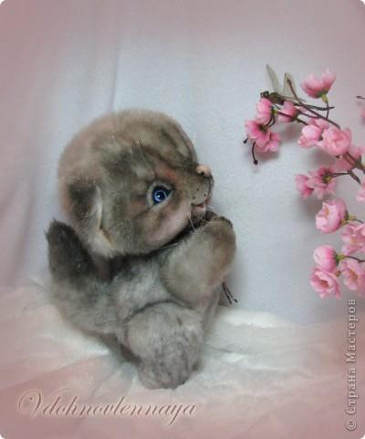 Любят кошкии коты Нюхать летние цветы: Можно капелькой росы Освежить свои усы)) фото 6