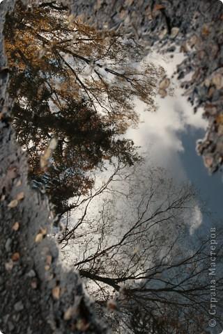 200 лет Царскосельскому лицею. Прогулка по Александровскому парку и окрестностям.. фото 5