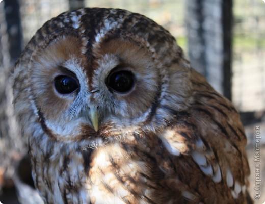 Вот такой мишутка. Тут главное в его глаза не смотреть, а то складывается ощущение что он просчитывает - допрыгнет или нет и не понятно кто кого покормит)). фото 14