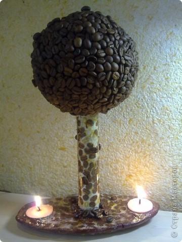 Кофейное дерево-две свечи.  фото 2