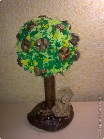 Кипарисовые шишки выросли на дереве у развалив в Сиде фото 1