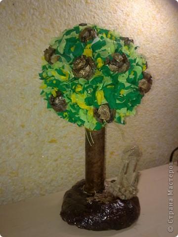 Кипарисовые шишки выросли на дереве у развалив в Сиде фото 2
