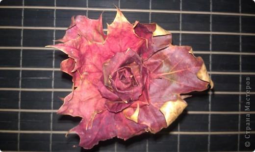 Розочка из кленовых листьев