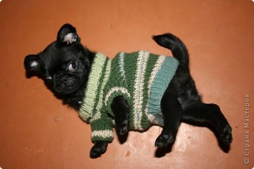 Вязанный свитерок для моего щеночки Боби.