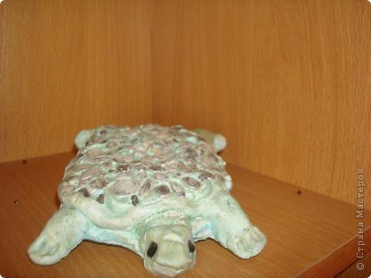 черепашки фото 1