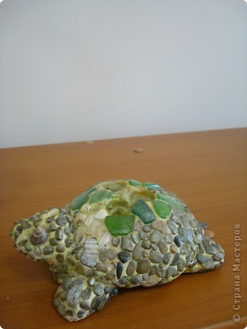 черепашки фото 2