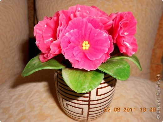 Фиалка фото 5