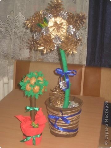 ореховое и шишковое деревья. фото 1