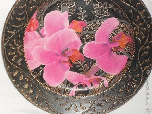 Опять любимые орхидеи. фото 7