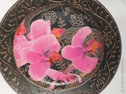 Опять любимые орхидеи. фото 2