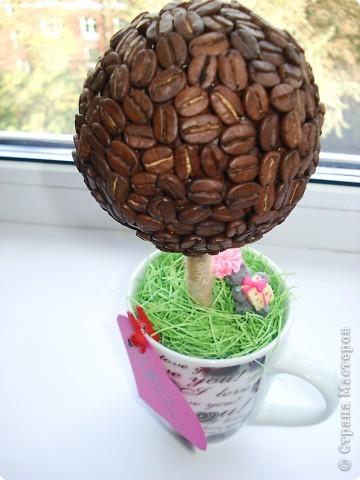 1.Кофейное деревце с собачкой! фото 4