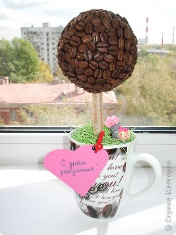1.Кофейное деревце с собачкой! фото 3