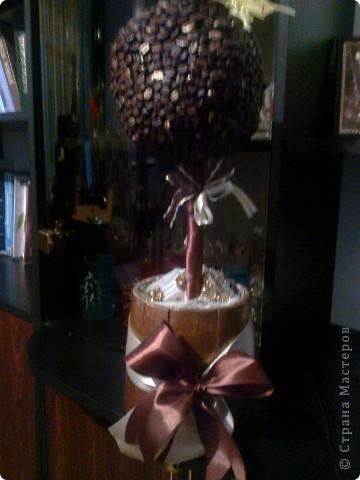 Магнітики і кавове дерево фото 3
