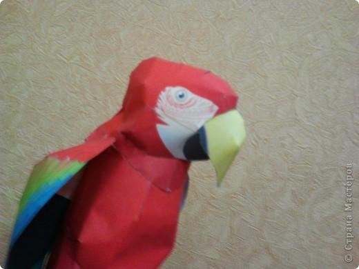Паперкрафт попугаи Бумага