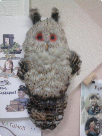 Ушастая сова фото 1