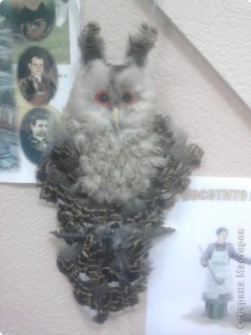 Ушастая сова фото 2