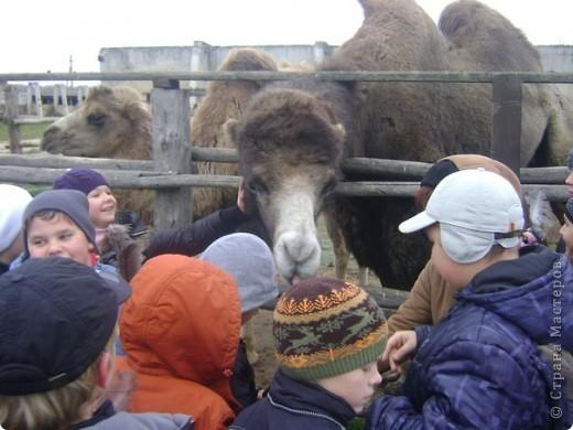 Вчера (29 октября)у нас была экскурсия на страусиную ферму,а потом мы переехали в заповедную зону где занимаются разведением зубров.Это всё находится около г.Чехов и Серпухов фото 9