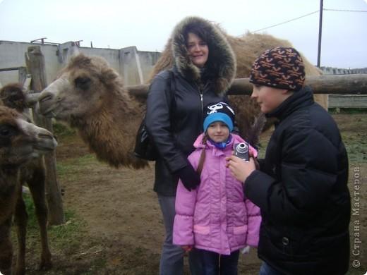 Вчера (29 октября)у нас была экскурсия на страусиную ферму,а потом мы переехали в заповедную зону где занимаются разведением зубров.Это всё находится около г.Чехов и Серпухов фото 14