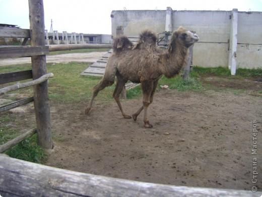 Вчера (29 октября)у нас была экскурсия на страусиную ферму,а потом мы переехали в заповедную зону где занимаются разведением зубров.Это всё находится около г.Чехов и Серпухов фото 13