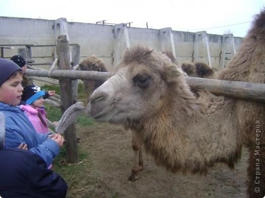 Вчера (29 октября)у нас была экскурсия на страусиную ферму,а потом мы переехали в заповедную зону где занимаются разведением зубров.Это всё находится около г.Чехов и Серпухов фото 15