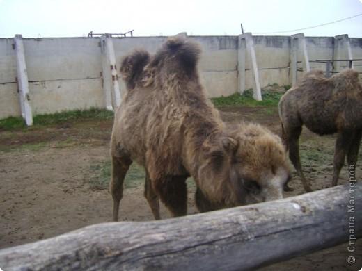Вчера (29 октября)у нас была экскурсия на страусиную ферму,а потом мы переехали в заповедную зону где занимаются разведением зубров.Это всё находится около г.Чехов и Серпухов фото 11