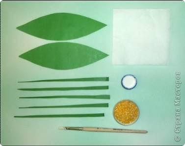Ландыш  Беленькие горошки на зелёной ножке. В мае зацветают, на весь лес благоухают.  фото 3