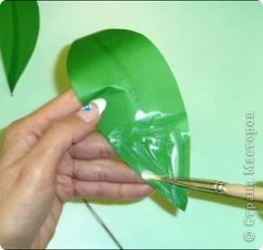 Ландыш  Беленькие горошки на зелёной ножке. В мае зацветают, на весь лес благоухают.  фото 18
