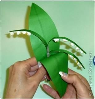 Ландыш  Беленькие горошки на зелёной ножке. В мае зацветают, на весь лес благоухают.  фото 20